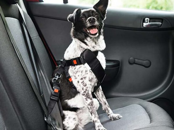 How to Use a Dog Seat Belt